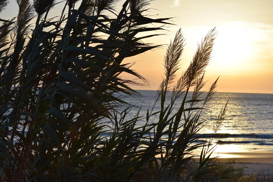 Playa Cádiz, Villa Surya retiros surf y yoga